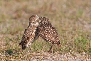 meilė paukščiai